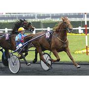 Лошади беговые Love You фото