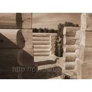 Дома и бани из бревна кедр фото