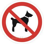Знак «Запрещается вход с животными» фото