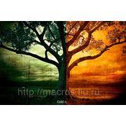 Курс «Растровая графика в Adobe Photoshop CS5» индивидуально фото