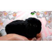 Крольчата NHD фото