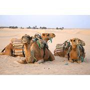 Тунис / Сусс / Порт Эль Кантауи !!! Вылет 10.10 на 10 дней питание завтрак+ужин фото