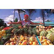Доминикана / Пунта Кана / Плайа Баваро Вылет - 10.10, на 8 дней, питание Всё включено. фото