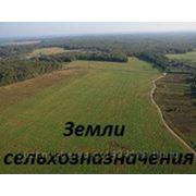 ЗЕМЕЛЬНЫЕ УЧАСТКИ от 250 до 5 000 000 руб. фото