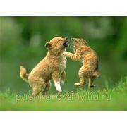Загородное вольерное содержание животных фото