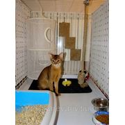 Уход за животными с кормами владельца животного в вольере 1мх1мх2х фото