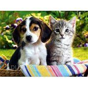 Передержка кошек фото