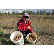 Сбор грибов фото