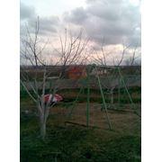 Обрезка плодовых и плодово-ягодных деревьев формировка кроны омолаживающая плодоносная обрезка фото