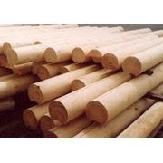 Закупка леса древесины. Кругляк цилиндрованый хвоя. фото