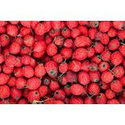 Шиповник плоды сушеные на экспорт фото