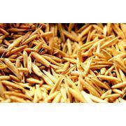 Овес от сельхозпроизводителя зерно овса фото