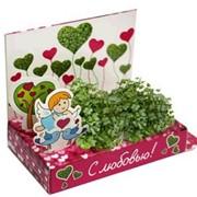Вырасти-любовь! Живая открытка Happy Plant наборы для выращивания фото