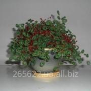 Работы из бисера: бонсай (деревья и кусты) фото