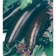 Семена баклажана Валентина F1 фото