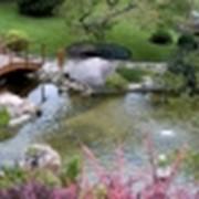 Искусственный водоем и строительство прудов фото