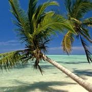 Пляжный тур в Доминикану