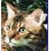Книги и журналы о животных фото