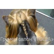 Прическа собакам, плетение косичек, топ-кнот фото
