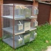 Клетка для кроликов 2-3м с новой системой расположения маточного отделения «МАКСОКРОЛ». фото