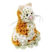 Игрушка из живых цветов Васька фото
