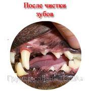 Чистка зубов собак декоративных пород фото