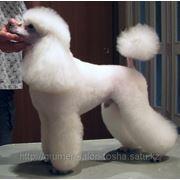 Стрижка собак модельная фото
