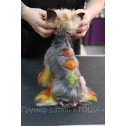 Креативное окрашивание собак фото