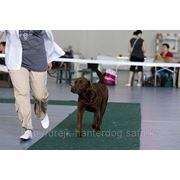 Дрессировка собак в караганде, подготовка к выставке фото