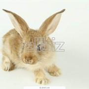 Молодняк кроликов фото