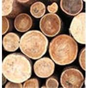 Пиломатериалы из экзотических пород древесины
