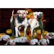 Собаки фото