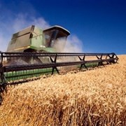 Фуражная пшеница 20 тонн доставка гост фото
