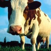 Заменитель обезжиренного молока (ЗОМ)