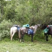 Тур Пять дней конного похода - самый легкий и короткий тур фото