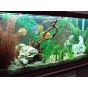 Обслуживание аквариумов в Саратове и Энгельсе фото