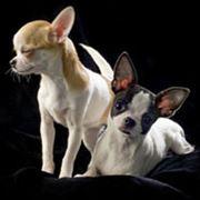 Собаки родственных пород фото