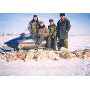 Организация охоты на волка вКостанайской области /Тургай, Амантугайский р-он фото