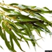 Эвкалипта эфирное масло, 10 мл фото