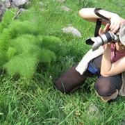Тур ботанический пятидневный летний фото
