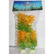 Набор водорослей Е фото