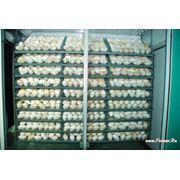 Продаю инкубационное гусиное яйцо фото
