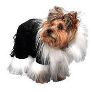 Одежда для собак фото