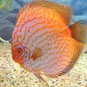 Комбикорм для рыбы фото