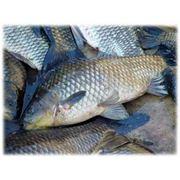 Комбикорма для рыб фото