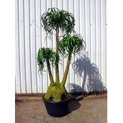 Растения для зимних садов фото
