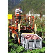 Пластиковый контейнер для хранения и перевозки фруктов и овощей фото