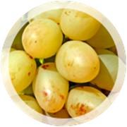 "Столовый виноград ""Аркадия"" фото"