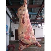 Мясо говядина оптом(свеж, заморож, охлажденное, туша) фото