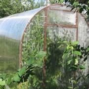 Теплица садовая фото